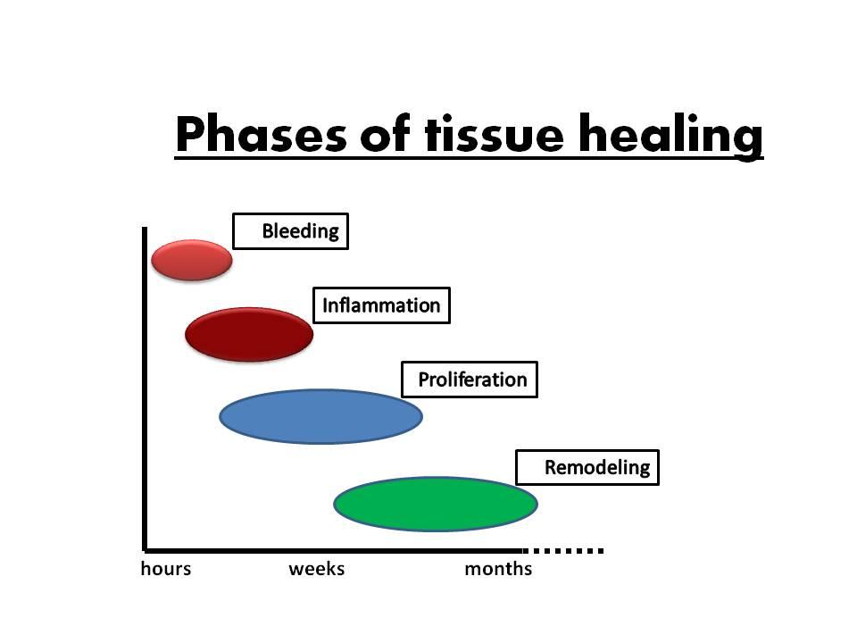 tissue-healing-eng-1